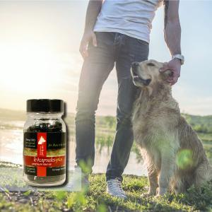 k9capsules 25mg CBD capsules for larger dogs