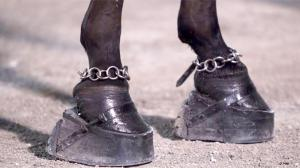 """""""Big Lick"""" Stacked Shoes and Ankle Chains Utilized on Tennessee Walking Horses"""