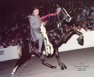 1992 Tennessee Walking Horse 2-Year-Old World Grand Champion JFK   Photo Credit: David Pruett