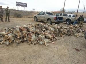 Wildlife Killing Contest