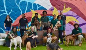 Wag Atlanta Team surrounded by some of their daycare dogs.