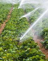 irrigation installation in Tucson