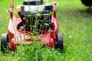 lawn care and weed control in Tucson