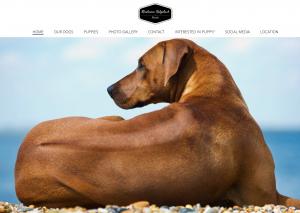 best Rhodesian Ridgeback breeder puppies for sale in texas current litter