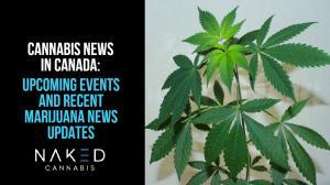 Upcoming Events and Recent Marijuana News Updates