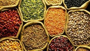 Commercial Seeds Market