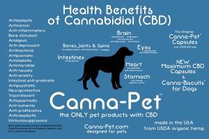 Cannabis Oil To Treat Skin Cancer Cbd